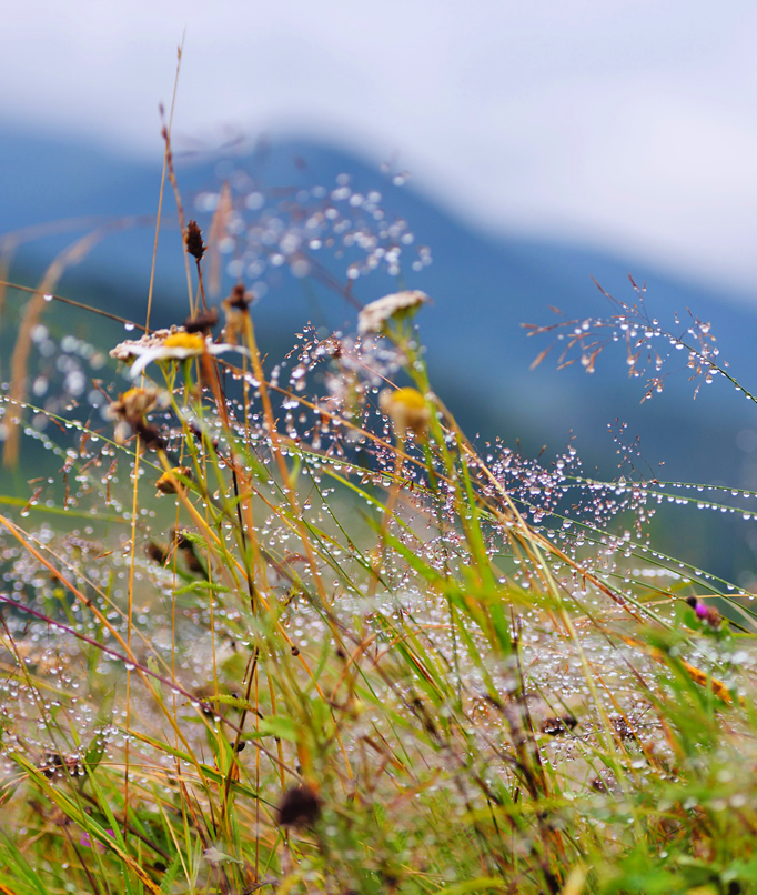 mountain-grass-background